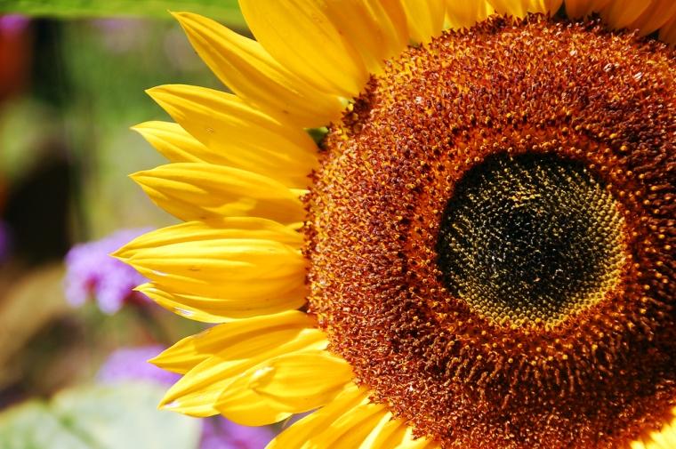 Feel Good Group - Sunflower
