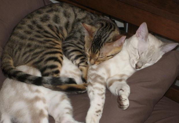 Feel Good Group - Love Cats